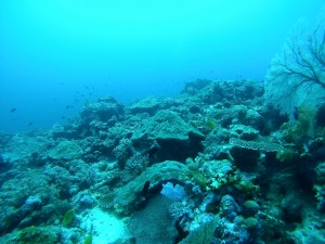Rainbow Reef - Solomon Islands, the Dive Shack, snorkel safari, adelaide, scuba, diving, snorkelling, spearfishing, freediving
