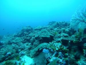 Rainbow Reef - Solomon Islands, the Dive Shack, snorkel safari, adelaide, scuba, diving, snorkelling, spearfishing, freediving