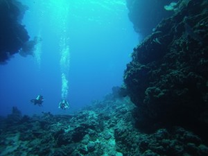 Leru Cut, Solomon Islands, the Dive Shack, snorkel safari, adelaide, scuba, diving, snorkelling, spearfishing, freediving