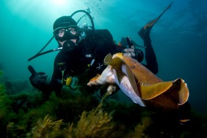 Nick and Cuttlefish Dave Robertson