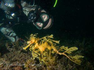 Me with a Leafy Seadragon